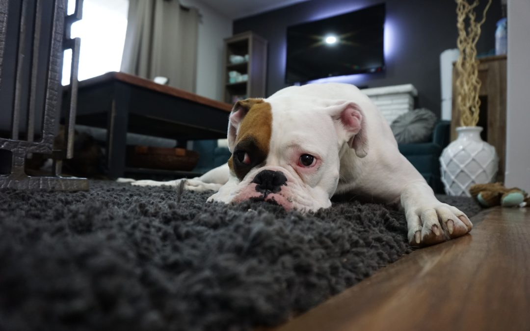 Home staging tips for pet owners